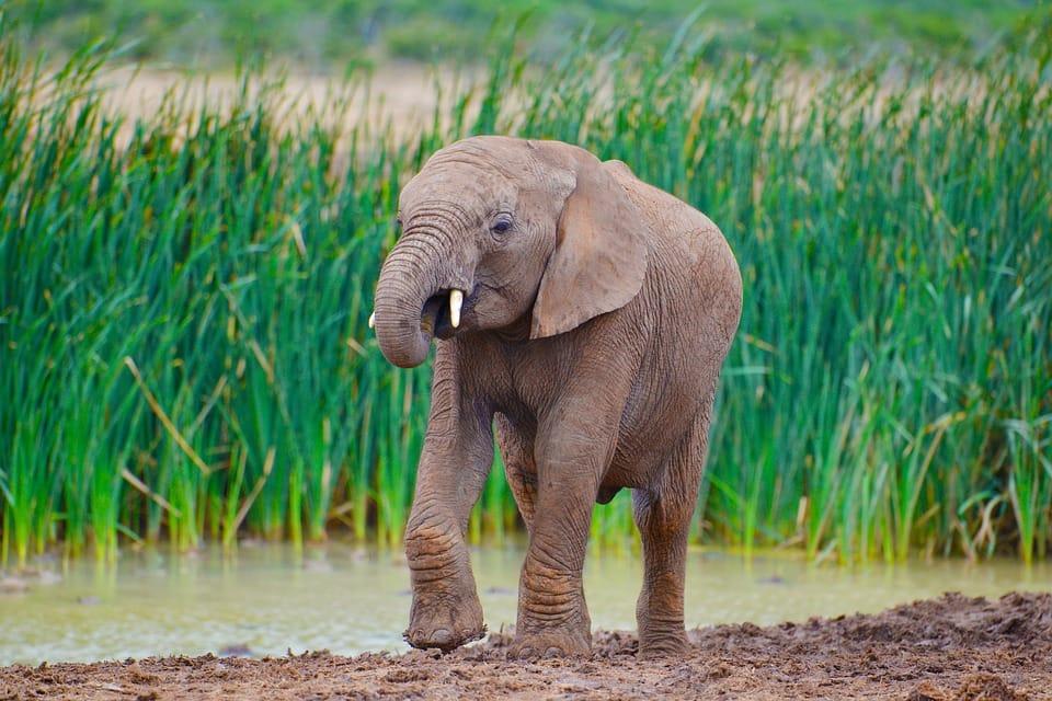 addo-elephant-park-2