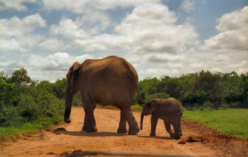 addo-elephant-park-3