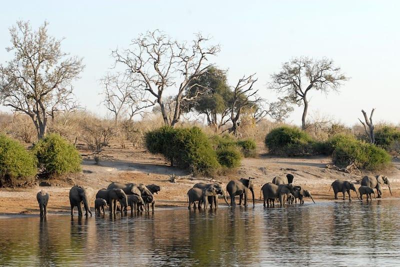 olifanten-botswana