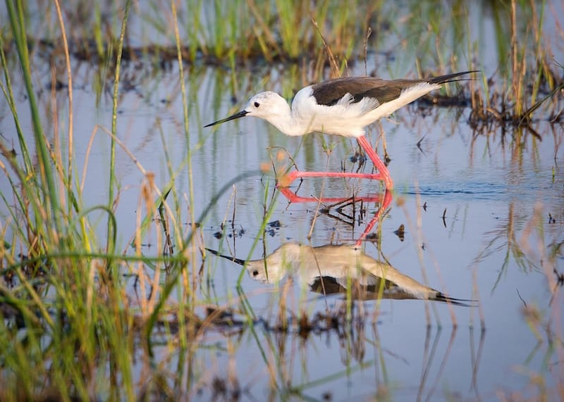 vogels-botswana