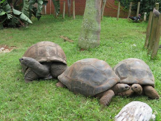 mitchell-park-zoo