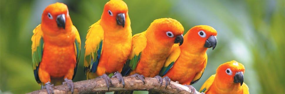 umgeni-bird-park