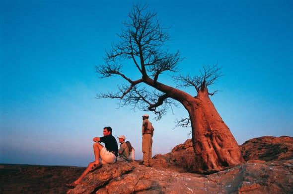 Sunset and Baobab tree