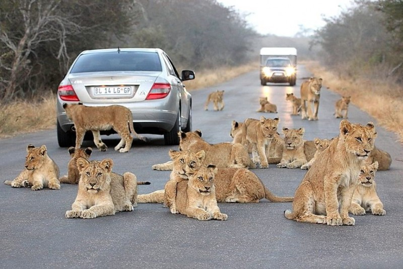 Get up-close with the wildlife in the Kruger National Park