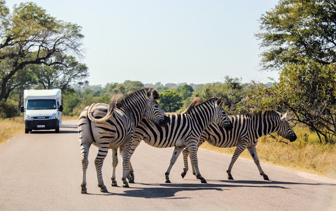 Self-drives in the Kruger National Park