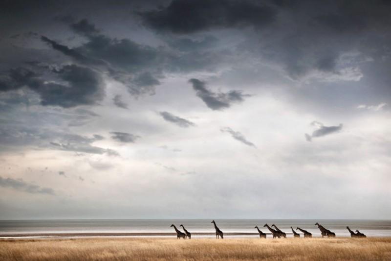 Etosha Pan is a haven for Namibia's wildlife