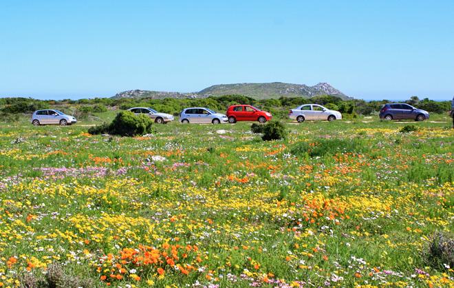 Springe in South Africa