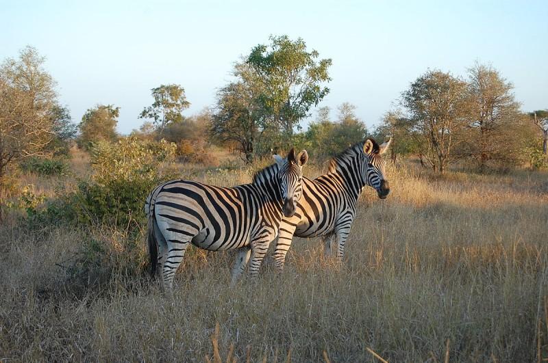 Dry vegetation in the Kruger