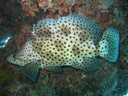 Barra Reef Mozambique