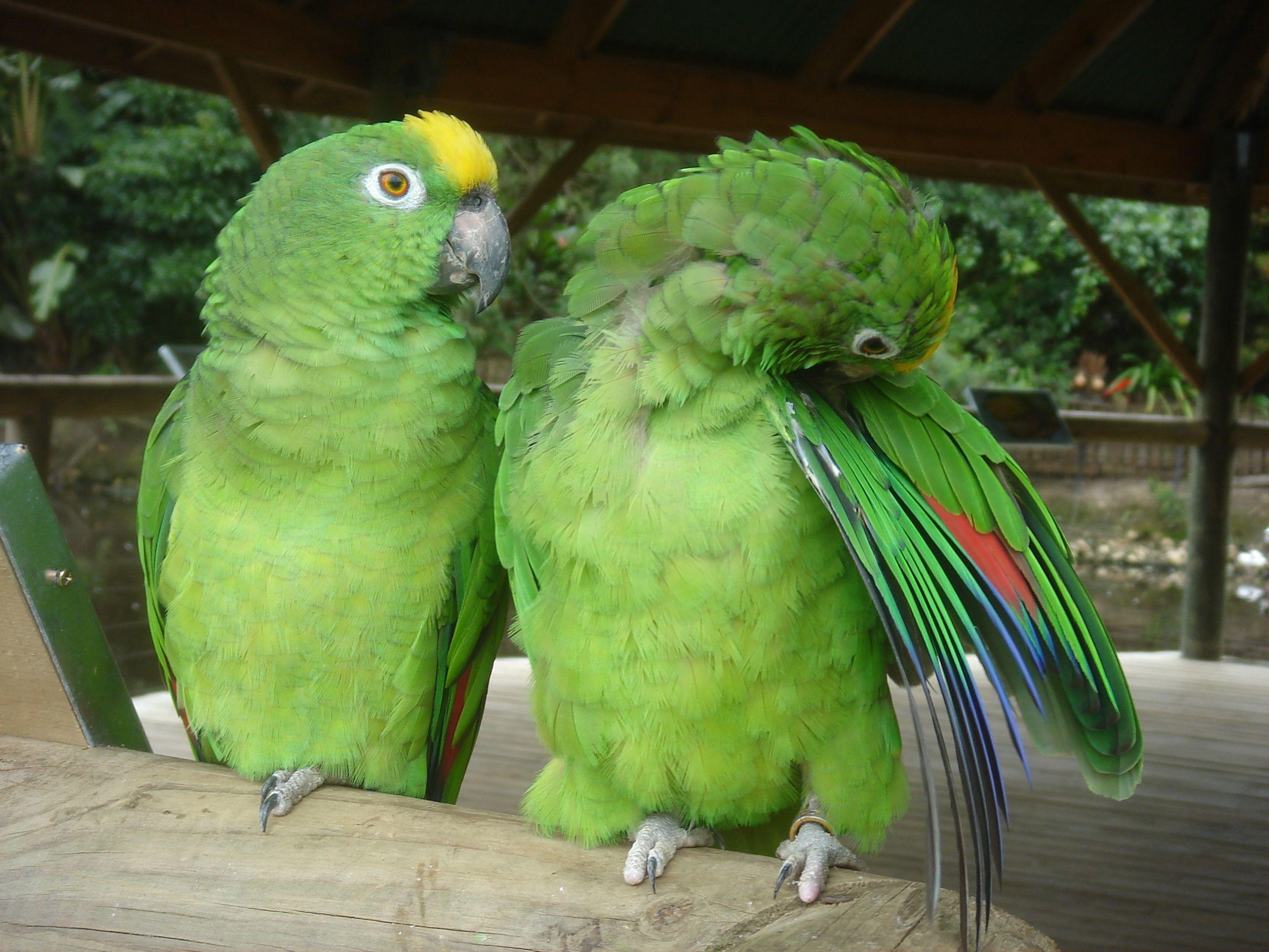 Baz Bus tours_Birds of Eden