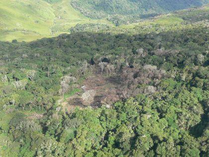 Deforestation in Mozambique