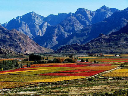South African wine route Franschhoek
