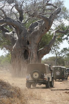Self-drive in the Trans-frontier Conservation Park in Mozambique