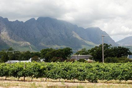 South Africa Wine Route Stellenbosch