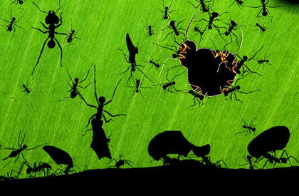 Veolia Wildlife Photographer of the Year 2010 Iziko Musuem Cape Town South Africa