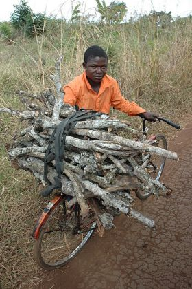 Local Mozambique boy collecting wood from cut down trees to sell for food
